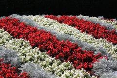 ζωηρόχρωμα λουλούδια Στοκ Φωτογραφία