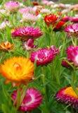 ζωηρόχρωμα λουλούδια Στοκ φωτογραφία με δικαίωμα ελεύθερης χρήσης
