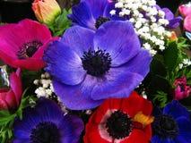 ζωηρόχρωμα λουλούδια Στοκ Φωτογραφίες