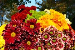ζωηρόχρωμα λουλούδια αν& Στοκ Φωτογραφία