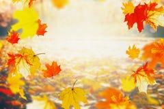 Ζωηρόχρωμα μειωμένα φύλλα φθινοπώρου την ηλιόλουστη ημέρα, υπαίθριο υπόβαθρο φύσης πτώσης Στοκ Εικόνες