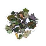 Ζωηρόχρωμα ξηρά patchouly φύλλα στοκ φωτογραφίες