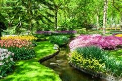Ζωηρόχρωμα λουλούδια άνοιξη στον κήπο Keukenhof, Κάτω Χώρες της Ολλανδίας Στοκ Φωτογραφία