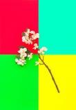 Ζωηρόχρωμα λουλούδια ανοίξεων υποβάθρου ανθών δέντρων της Apple Στοκ φωτογραφία με δικαίωμα ελεύθερης χρήσης