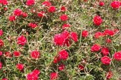 ζωηρόχρωμα λουλούδια αν& Στοκ Φωτογραφίες