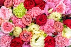 ζωηρόχρωμα λουλούδια αν& Στοκ φωτογραφία με δικαίωμα ελεύθερης χρήσης