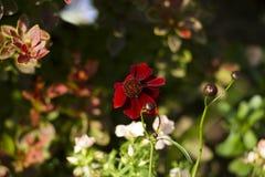 Ζωηρόχρωμα λουλούδια κήπων Στοκ εικόνες με δικαίωμα ελεύθερης χρήσης