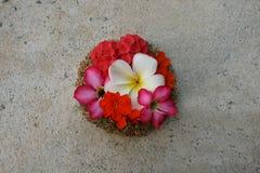 ζωηρόχρωμα λουλούδια κ&alph στοκ φωτογραφία