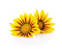 ζωηρόχρωμα λουλούδια μαργαριτών Στοκ φωτογραφία με δικαίωμα ελεύθερης χρήσης
