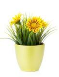 Ζωηρόχρωμα λουλούδια μαργαριτών flowerpot στοκ φωτογραφία