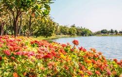 Ζωηρόχρωμα λουλούδια μαργαριτών gerbera Στοκ εικόνες με δικαίωμα ελεύθερης χρήσης