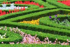 Ζωηρόχρωμα λουλούδια με την πράσινη λεπτομέρεια θάμνων Στοκ φωτογραφία με δικαίωμα ελεύθερης χρήσης
