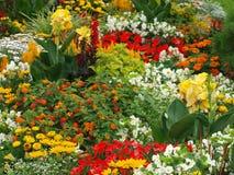 ζωηρόχρωμα λουλούδια σπορείων Στοκ Φωτογραφία