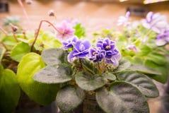 Ζωηρόχρωμα λουλούδια στα δοχεία Στοκ εικόνα με δικαίωμα ελεύθερης χρήσης