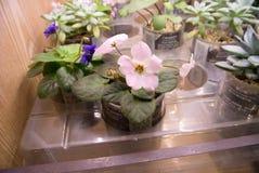 Ζωηρόχρωμα λουλούδια στα δοχεία Στοκ Εικόνα