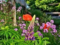 Ζωηρόχρωμα λουλούδια στον κήπο Στοκ Εικόνες