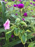 Ζωηρόχρωμα λουλούδια στον κήπο Στοκ φωτογραφίες με δικαίωμα ελεύθερης χρήσης