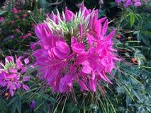 Ζωηρόχρωμα λουλούδια στον κήπο Στοκ Εικόνα
