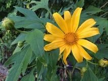 Ζωηρόχρωμα λουλούδια στον κήπο Στοκ Φωτογραφίες