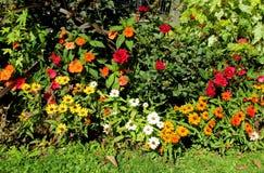 Ζωηρόχρωμα λουλούδια στο θάμνο Στοκ Εικόνες