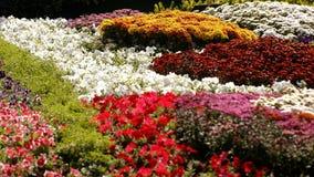 Ζωηρόχρωμα λουλούδια τουλιπών και υάκινθων Στοκ Φωτογραφία
