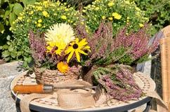 Λουλούδια φθινοπώρου στον κήπο Στοκ εικόνες με δικαίωμα ελεύθερης χρήσης