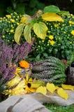 Λουλούδια φθινοπώρου στον κήπο Στοκ φωτογραφία με δικαίωμα ελεύθερης χρήσης
