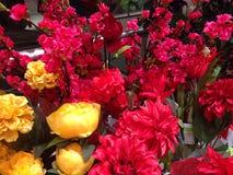 ζωηρόχρωμα λουλούδια στοκ εικόνες με δικαίωμα ελεύθερης χρήσης