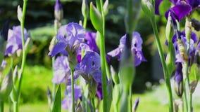 ζωηρόχρωμα λουλούδια απόθεμα βίντεο