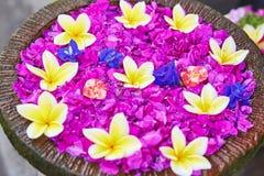 Ζωηρόχρωμα λουλούδια Frangipani σε ένα κύπελλο του νερού Στοκ Φωτογραφίες