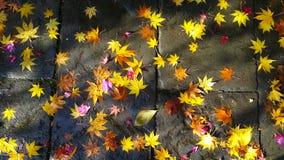 Ζωηρόχρωμα πεσμένα φύλλα κάτω από το πρώτο χιόνι στην πορεία ασφάλτου το φθινόπωρο Στοκ Εικόνες