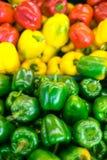 ζωηρόχρωμα πιπέρια κουδο&u Στοκ φωτογραφίες με δικαίωμα ελεύθερης χρήσης