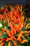 Ζωηρόχρωμα πιπέρια στην εστίαση στοκ εικόνες