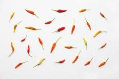 Ζωηρόχρωμα πιπέρια τσίλι στο λευκό Στοκ εικόνες με δικαίωμα ελεύθερης χρήσης