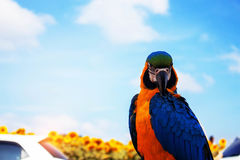 Ζωηρόχρωμα πουλιά με το μπλε ουρανό Στοκ Εικόνες