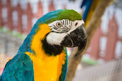 Ζωηρόχρωμα πουλιά παπαγάλων στο αγρόκτημα κροκοδείλων Samut Prakan και το ζωολογικό κήπο, θόριο Στοκ φωτογραφία με δικαίωμα ελεύθερης χρήσης