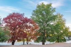 Ζωηρόχρωμα πράσινα, κόκκινα, κίτρινα, πορτοκαλιά δέντρα στην όχθη ποταμού Στοκ Φωτογραφίες