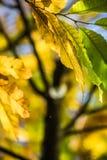 Ζωηρόχρωμα πράσινα φύλλα κάστανων εποχής πτώσης φθινοπώρου, δημιουργικό σχέδιο υποβάθρου Στοκ Εικόνες