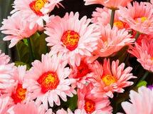 Ζωηρόχρωμα πλαστικά λουλούδια Στοκ Εικόνες