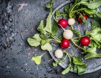 Ζωηρόχρωμα ραδίκια με τα πράσινα φύλλα haulm στο πιάτο στο σκοτεινό αγροτικό υπόβαθρο, τοπ άποψη Στοκ Εικόνες