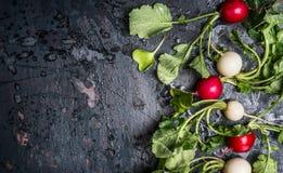 Ζωηρόχρωμα ραδίκια με τα πράσινα φύλλα haulm στο σκοτεινό αγροτικό υπόβαθρο, τοπ άποψη, θέση για το κείμενο Στοκ Εικόνα