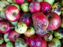 ζωηρόχρωμα σάπια μήλα Στοκ Εικόνες