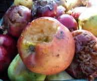 ζωηρόχρωμα σάπια μήλα Στοκ εικόνα με δικαίωμα ελεύθερης χρήσης