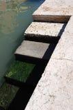 Ζωηρόχρωμα σκαλοπάτια πετρών στην πόλη της Βενετίας από το νερό με το βρύο Στοκ φωτογραφίες με δικαίωμα ελεύθερης χρήσης