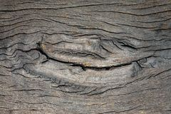 Ζωηρόχρωμα σχέδια του ξύλινου δαπέδου Στοκ Φωτογραφία