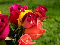 ζωηρόχρωμα τριαντάφυλλα Στοκ Φωτογραφία