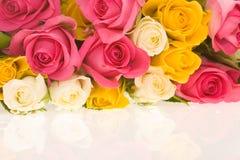 ζωηρόχρωμα τριαντάφυλλα στοκ φωτογραφία με δικαίωμα ελεύθερης χρήσης