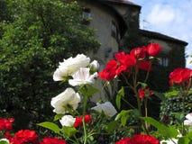 Ζωηρόχρωμα τριαντάφυλλα στον κήπο του κάστρου Στοκ Εικόνες