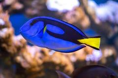 Ζωηρόχρωμα τροπικά ψάρια στοκ εικόνες με δικαίωμα ελεύθερης χρήσης