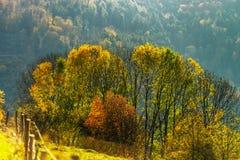 Ζωηρόχρωμα φθινοπωρινά δάση στην Αλσατία, Γαλλία Στοκ φωτογραφία με δικαίωμα ελεύθερης χρήσης